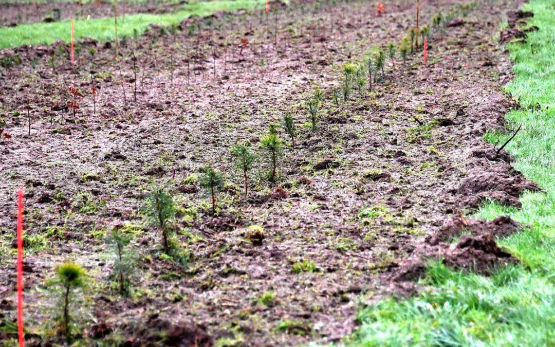 Une forêt durable et adaptée au changement climatique créée en partenariat avec l'ONF